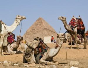 Kameler og Keops